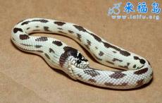 蛇也能自慰?