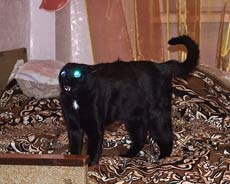 這只貓長得好有型啊