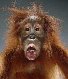 雷!猴子的丰富表情不逊人类2