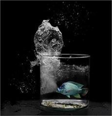 pez fuerte