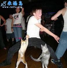 Bailar con gatos