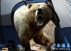 正在野外ML狗熊进来了!