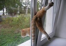 下面卡在窗户上的猫