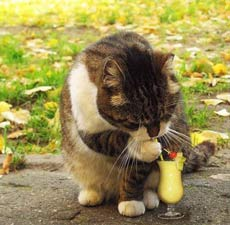 Cats Drink