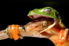 蛇与蛙的生死搏斗