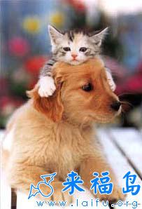 微博狗表情_微博上那只狗的表情_微博里狗的表情 ...