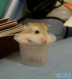 超可爱的小老鼠