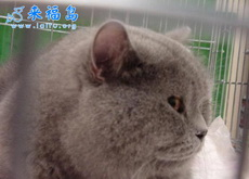 小胖家的猫
