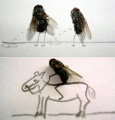 骑马的苍蝇