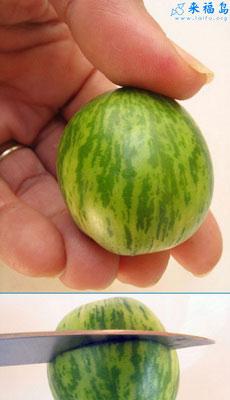 超级迷你西瓜