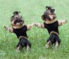 舞蹈中的狗狗