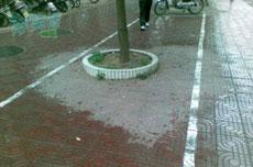 下雨了,超市门口的树下留下一个爱的印记