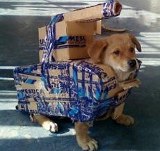 Estoy preparado para ir a la batalla!
