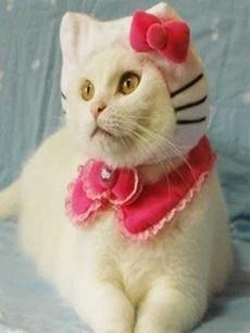你以为戴上了头饰,就成了hello kitty了!
