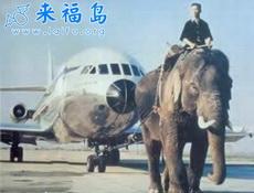 大象的另一种职业