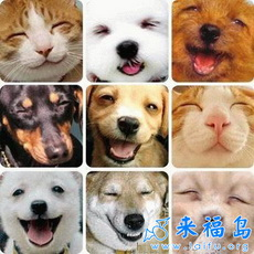 Smiling Cats and Dogs