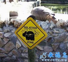 Cuidar al hipopótamos