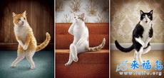 仪态优雅的猫