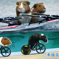 Los Juegos Olímpicos de animales