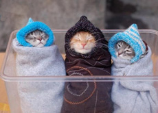 猫咪宝宝三胞胎