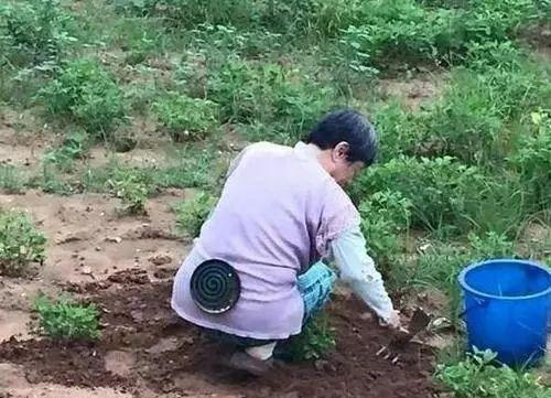 现在的阿姨个个脑洞大开,这样的点子都能想得出来,田地里干活再也不怕蚊子咬了