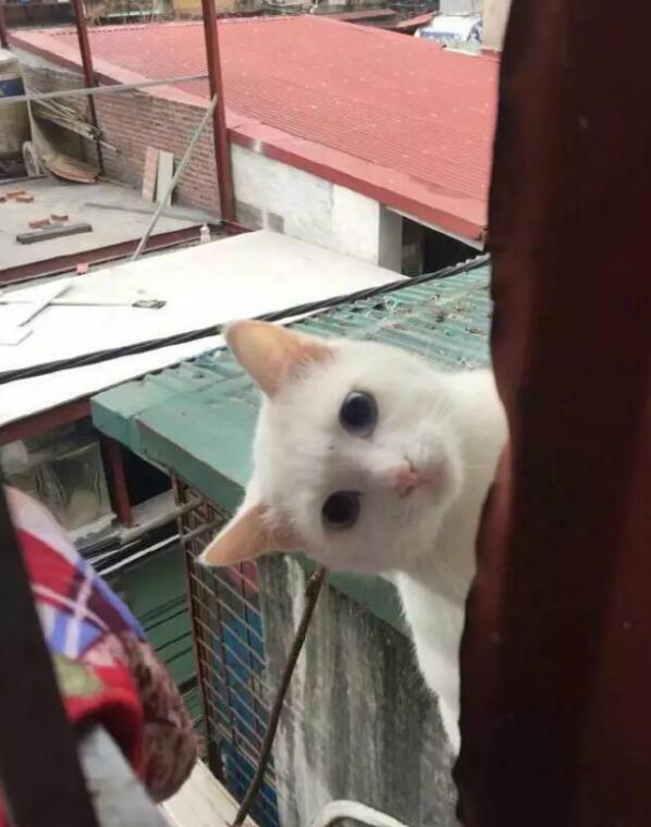 喂了一次罐罐给这流浪猫之后,第二天又来灵魂拷问了!