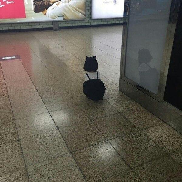 好可爱的小猫啊,走丢了吗?