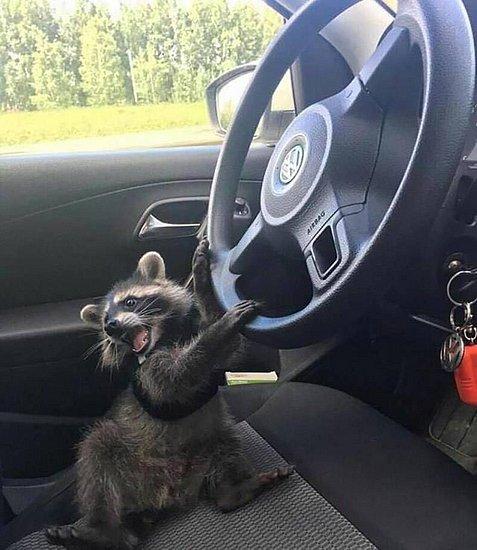 做好了,要开车喽