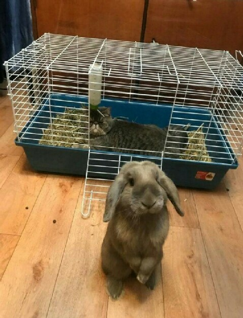 窝让占了,这不是明摆着欺负兔吗!