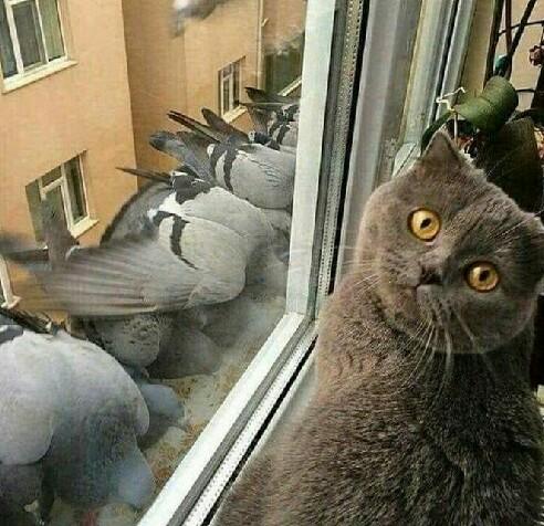 看什么看,你的身份暴露了……[动物图片]