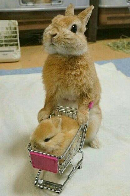 妈妈带你买好吃的去