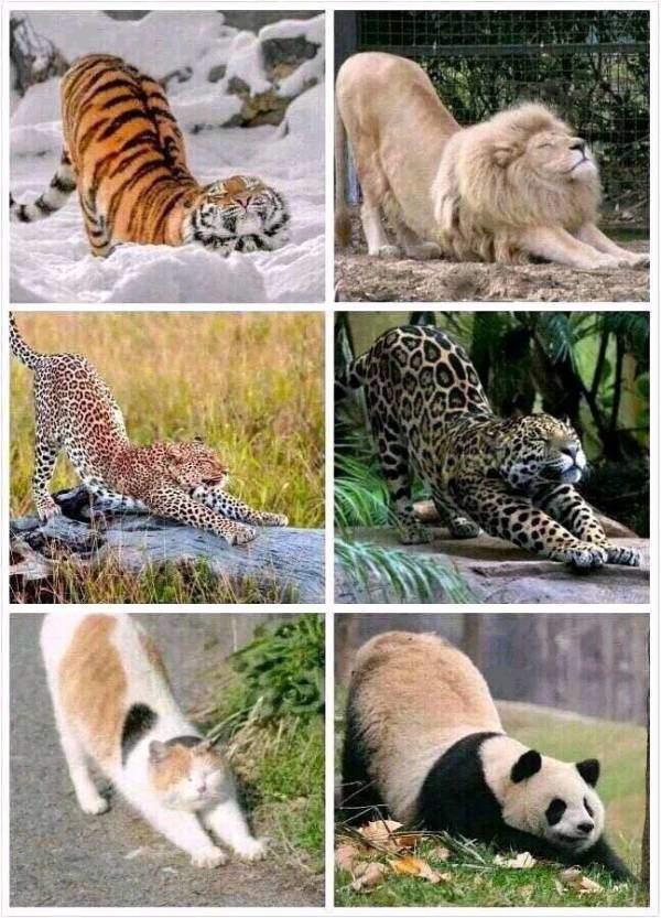 乱入了一只非猫科动物