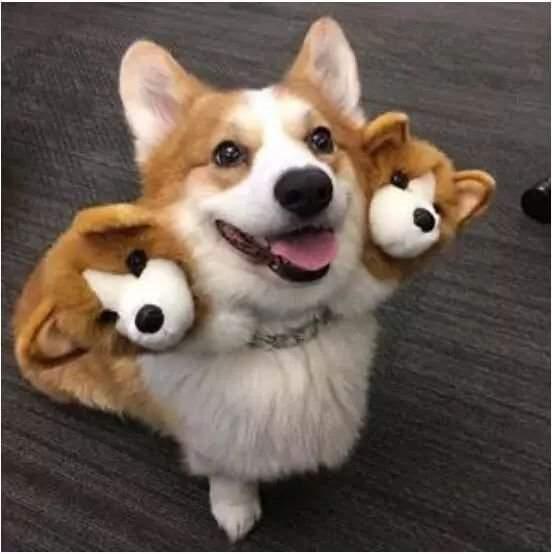 可怕的地狱三头犬