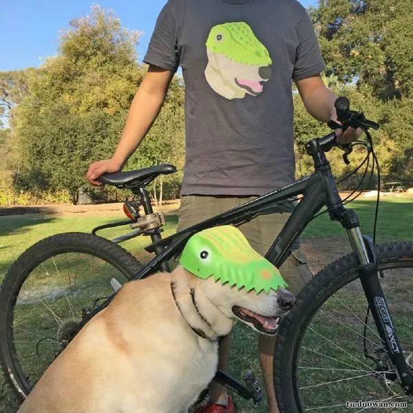 强迫狗也戴绿帽