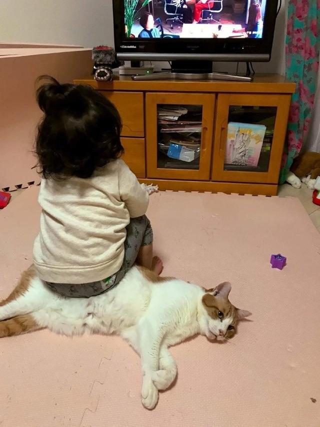猫咪:我太难了