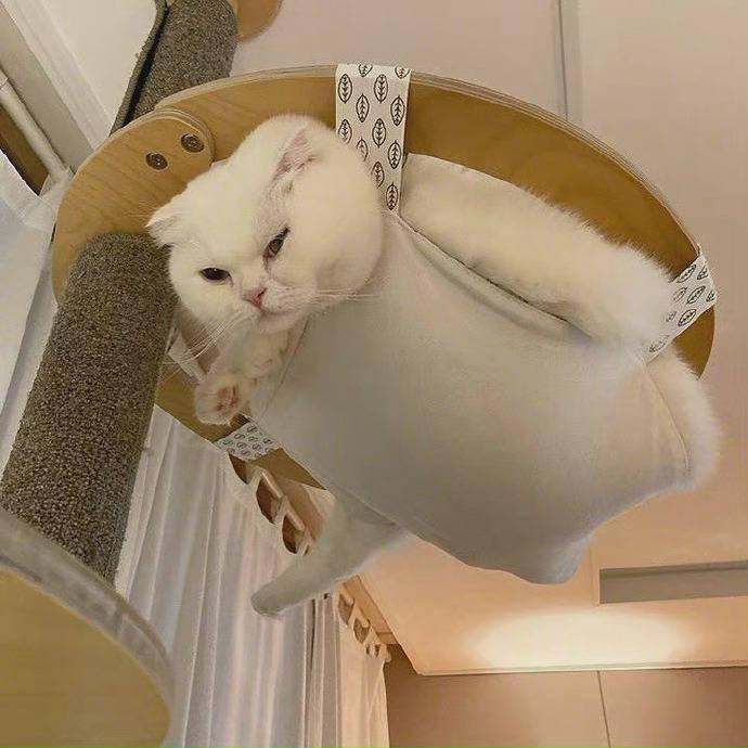 明明是一个吊床,怎么看起来像被绑在上面的一样