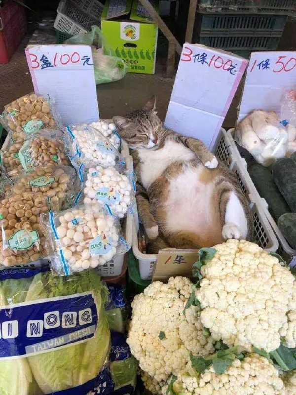 这猫多少钱一条