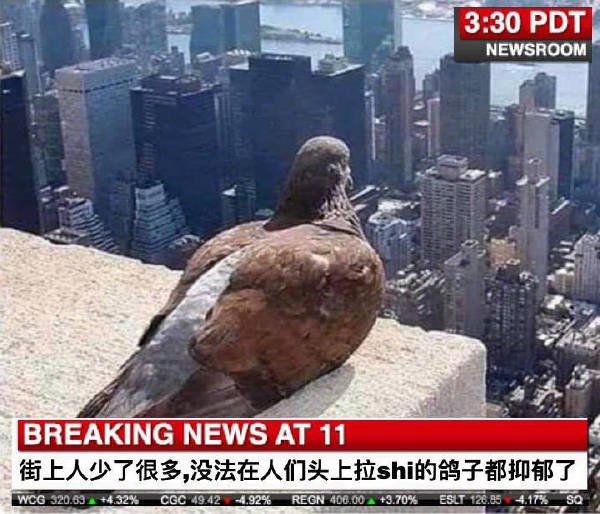 鴿子都抑郁了