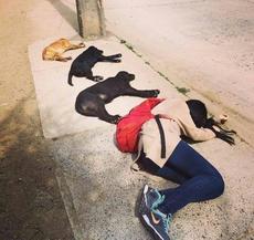 我们都是单身狗,我们都爱一起晒太阳